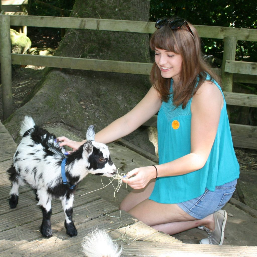 Woman feeding goat